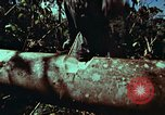 Image of survival techniques Philippines, 1968, second 24 stock footage video 65675072401