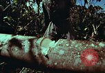 Image of survival techniques Philippines, 1968, second 29 stock footage video 65675072401