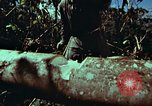 Image of survival techniques Philippines, 1968, second 31 stock footage video 65675072401