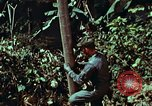 Image of survival techniques Philippines, 1968, second 36 stock footage video 65675072401