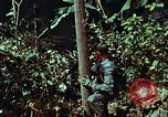 Image of survival techniques Philippines, 1968, second 37 stock footage video 65675072401