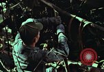 Image of survival techniques Philippines, 1968, second 54 stock footage video 65675072401