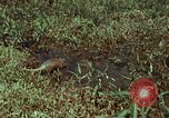 Image of jungle animals and fish Philippines, 1968, second 3 stock footage video 65675072410