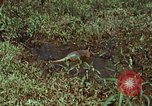 Image of jungle animals and fish Philippines, 1968, second 5 stock footage video 65675072410
