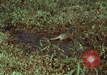 Image of jungle animals and fish Philippines, 1968, second 6 stock footage video 65675072410