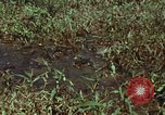Image of jungle animals and fish Philippines, 1968, second 7 stock footage video 65675072410