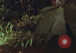 Image of jungle animals and fish Philippines, 1968, second 16 stock footage video 65675072410