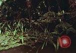 Image of jungle animals and fish Philippines, 1968, second 18 stock footage video 65675072410