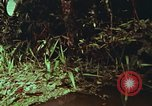 Image of jungle animals and fish Philippines, 1968, second 19 stock footage video 65675072410