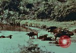 Image of jungle animals and fish Philippines, 1968, second 27 stock footage video 65675072410
