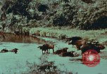 Image of jungle animals and fish Philippines, 1968, second 28 stock footage video 65675072410