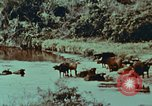 Image of jungle animals and fish Philippines, 1968, second 30 stock footage video 65675072410