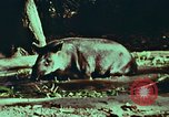 Image of jungle animals and fish Philippines, 1968, second 33 stock footage video 65675072410