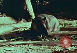 Image of jungle animals and fish Philippines, 1968, second 34 stock footage video 65675072410