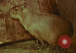 Image of jungle animals and fish Philippines, 1968, second 37 stock footage video 65675072410