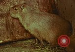 Image of jungle animals and fish Philippines, 1968, second 39 stock footage video 65675072410