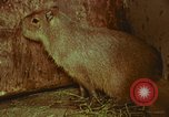 Image of jungle animals and fish Philippines, 1968, second 41 stock footage video 65675072410