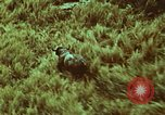 Image of jungle animals and fish Philippines, 1968, second 53 stock footage video 65675072410