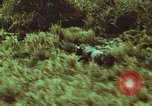 Image of jungle animals and fish Philippines, 1968, second 55 stock footage video 65675072410