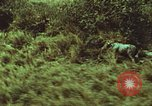 Image of jungle animals and fish Philippines, 1968, second 57 stock footage video 65675072410