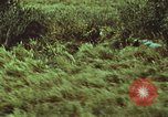 Image of jungle animals and fish Philippines, 1968, second 58 stock footage video 65675072410