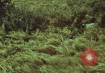 Image of jungle animals and fish Philippines, 1968, second 59 stock footage video 65675072410