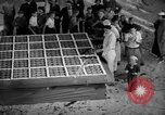 Image of largest pie Talent Oregon USA, 1936, second 18 stock footage video 65675072521