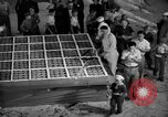 Image of largest pie Talent Oregon USA, 1936, second 19 stock footage video 65675072521