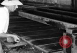 Image of chicken raising United States USA, 1919, second 14 stock footage video 65675072551