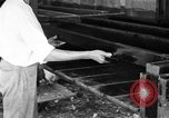 Image of chicken raising United States USA, 1919, second 33 stock footage video 65675072551
