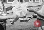Image of chicken raising United States USA, 1919, second 39 stock footage video 65675072551