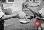 Image of chicken raising United States USA, 1919, second 51 stock footage video 65675072551