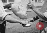 Image of chicken raising United States USA, 1919, second 53 stock footage video 65675072551