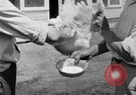 Image of chicken raising United States USA, 1919, second 55 stock footage video 65675072551