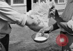 Image of chicken raising United States USA, 1919, second 56 stock footage video 65675072551