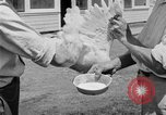 Image of chicken raising United States USA, 1919, second 57 stock footage video 65675072551
