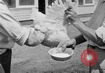 Image of chicken raising United States USA, 1919, second 59 stock footage video 65675072551