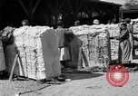 Image of cotton shipping New York United States USA, 1919, second 23 stock footage video 65675072557