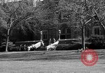 Image of Fordham University New York United States USA, 1962, second 50 stock footage video 65675072590