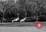 Image of Fordham University New York United States USA, 1962, second 59 stock footage video 65675072590