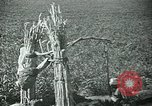 Image of Ancient methods of agriculture in the Middle East Middle East, 1936, second 17 stock footage video 65675072700