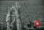 Image of Ancient methods of agriculture in the Middle East Middle East, 1936, second 19 stock footage video 65675072700