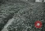Image of Ancient methods of agriculture in the Middle East Middle East, 1936, second 38 stock footage video 65675072700