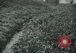 Image of Ancient methods of agriculture in the Middle East Middle East, 1936, second 39 stock footage video 65675072700