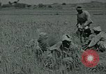 Image of Ancient methods of agriculture in the Middle East Middle East, 1936, second 43 stock footage video 65675072700