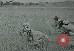 Image of Ancient methods of agriculture in the Middle East Middle East, 1936, second 44 stock footage video 65675072700