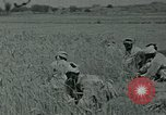 Image of Ancient methods of agriculture in the Middle East Middle East, 1936, second 45 stock footage video 65675072700