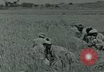 Image of Ancient methods of agriculture in the Middle East Middle East, 1936, second 46 stock footage video 65675072700