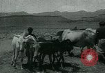 Image of Ancient methods of agriculture in the Middle East Middle East, 1936, second 56 stock footage video 65675072700