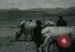 Image of Ancient methods of agriculture in the Middle East Middle East, 1936, second 58 stock footage video 65675072700